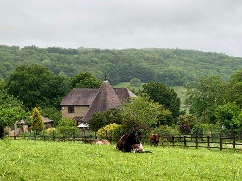 5- cows 2